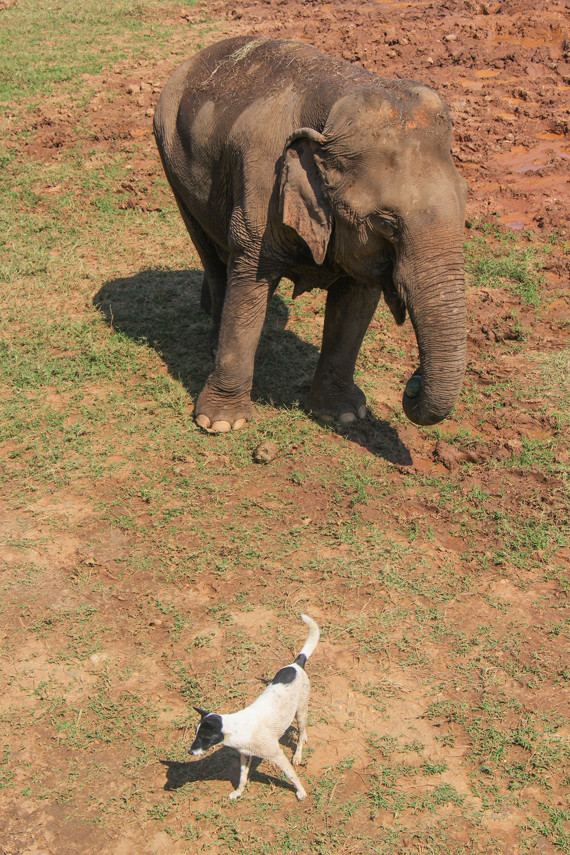 Elephant_Nature_Park_koira