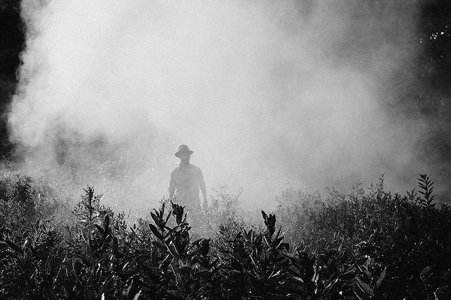 Enquanto em 2015 foram aprovados 139 agrotóxicos no país, em 2018, esse número mais que triplicou, saltando para 450 - Créditos: Pixabay