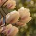 Große Blüten 1 by KaAuenwasser