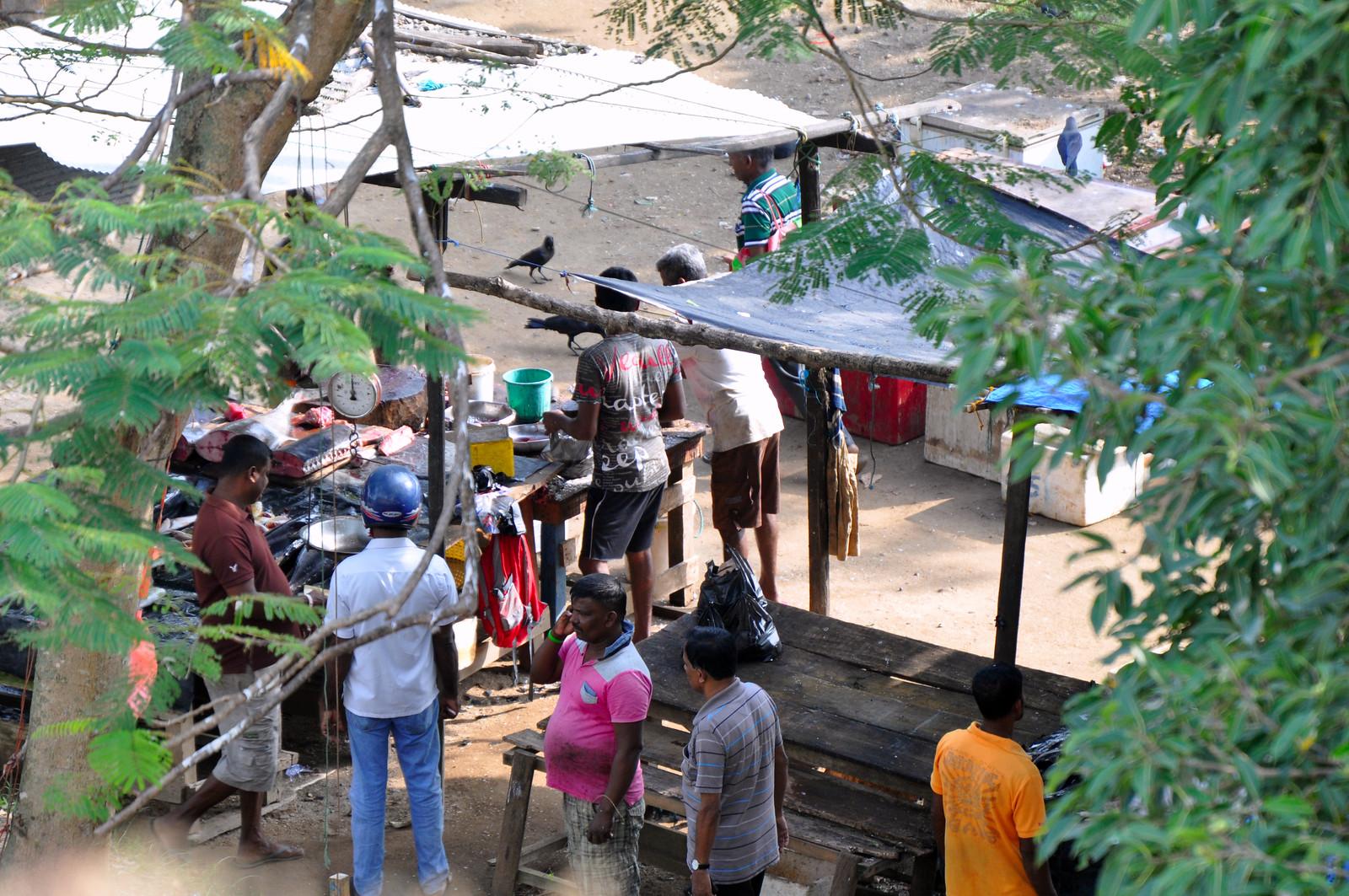 Visitar Galle en un día, Sri Lanka galle en un día - 46957395312 746ca6f89f h - Galle en un día, Sri Lanka