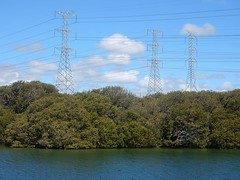 Pylons in Mangroves