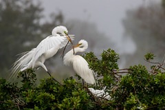 Building a Nest Together