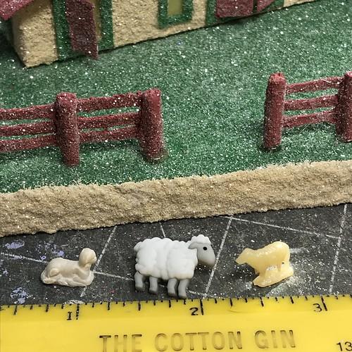 Ewe's fluffy…