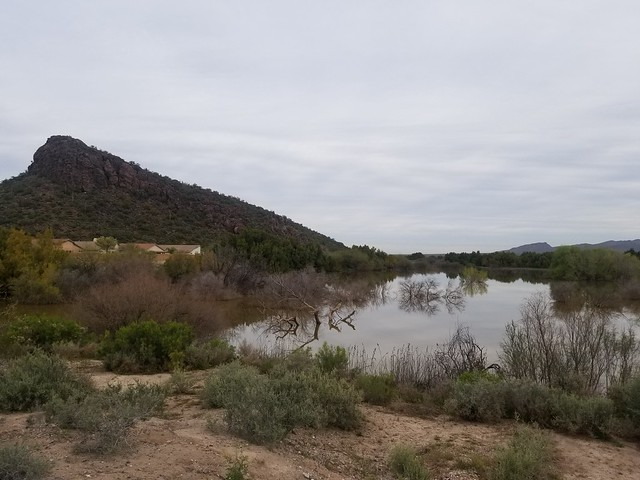 El Rio Preserve. Town of Marana, outside of Tucson, Arizona. March 2019.