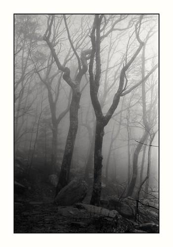 fog trees nature landscape blackandwhitelandscape blackandwhitefilm filmphotography 35mmfilm
