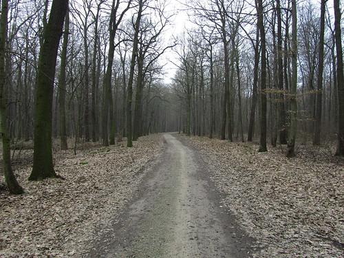 20110315 0202 145 Jakobus Wald Weg