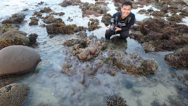 Boulder horn coral (Hydnophora exesa)