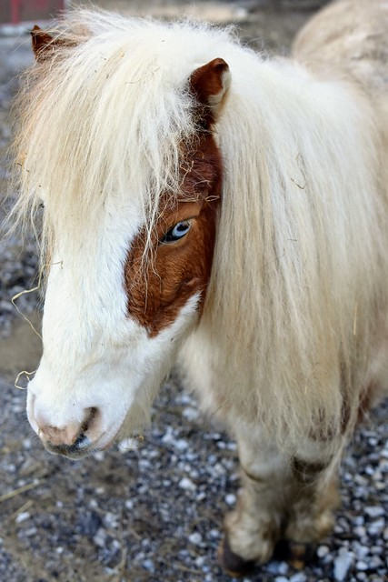 Horse with the Blue Eyes