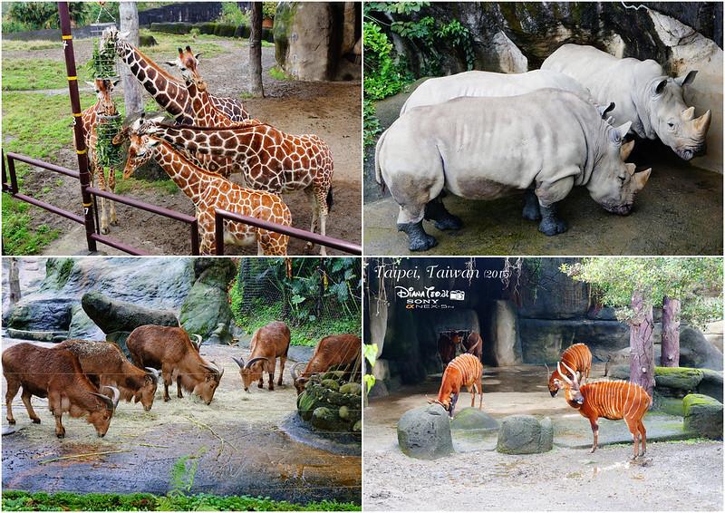 2015 Taiwan Taipei Zoo 4
