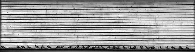 Thirty pigeons, RICOH PENTAX K-70, smc PENTAX-DA 18-55mm F3.5-5.6 AL WR