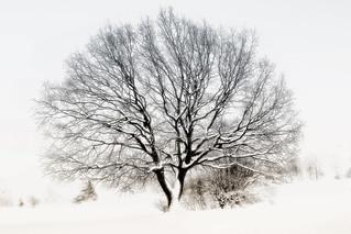an einem verschneiter Tag - on a snowy day