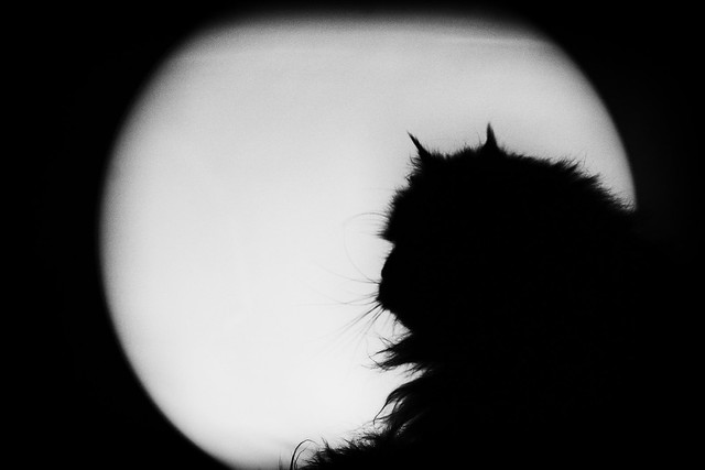 Ernesto on the moon