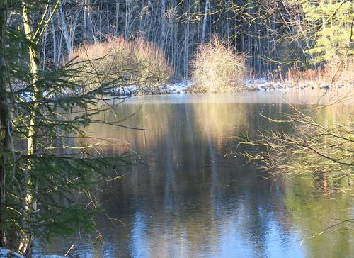 Teich hinter Bücheloh