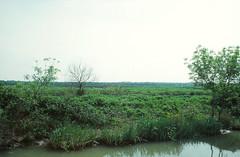 Canal du Petit Rhône à Sète - Photo of Bellegarde