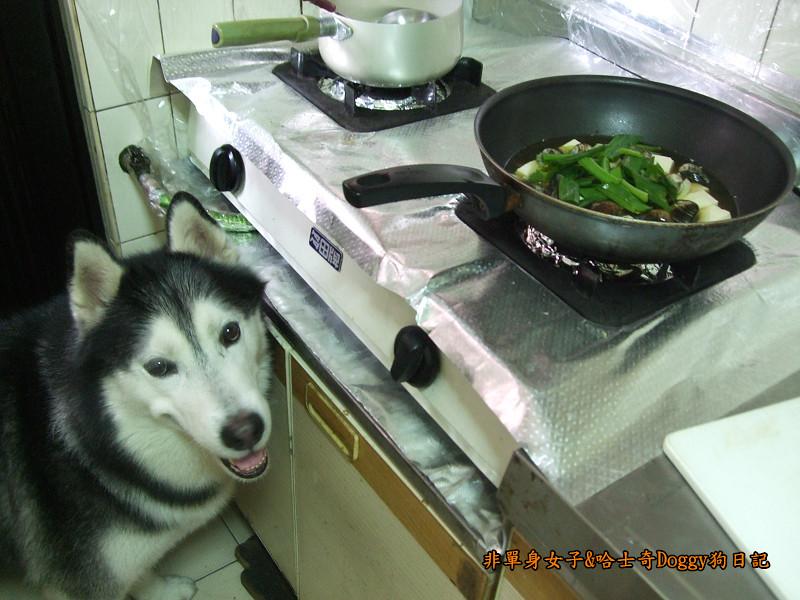Doggy酒蒸豆腐蛤蜊06