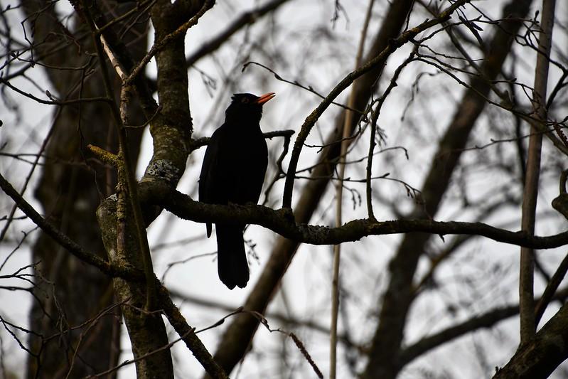 Bird 12.03 (1)