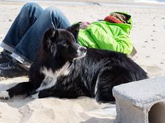 Nauset Light Beach - Juniper 3