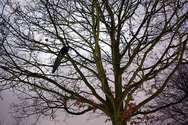 Lord im Baum