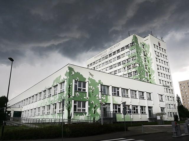 Drzewa na budynku, Wydział Leśnictwa Uniwersytetu Rolniczego