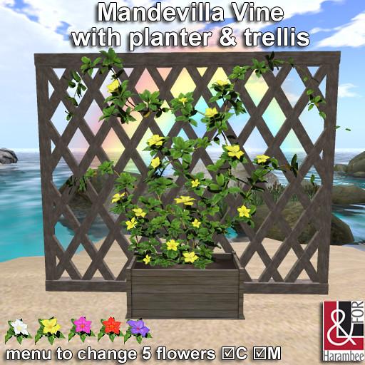 Mandevilla Vine with planter & trellis