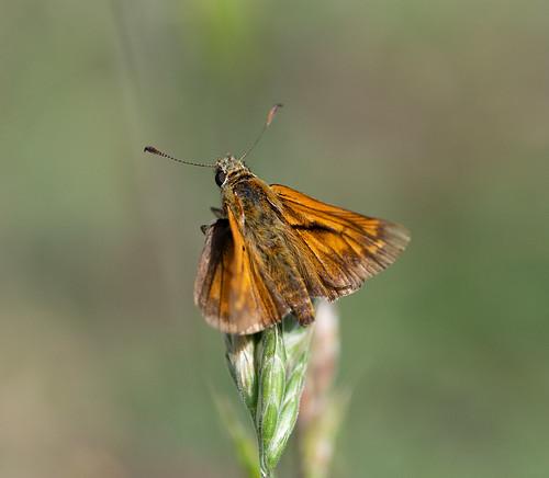 Schmetterlinge_22