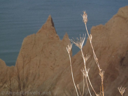 The remains of summer wildflowers above Chimney Bluffs State Park, New York