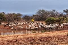 To masaimara, Kenya