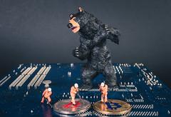 Black bear with Bitcoin miners
