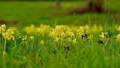 printemps-en-dordogne_25739343083_o - Photo of Cherveix-Cubas