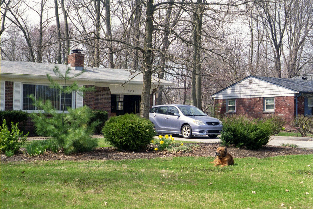 Front yard with dog