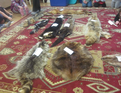 labeled pelts