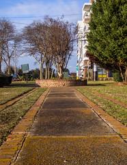 2019.02_Avondale walkabout