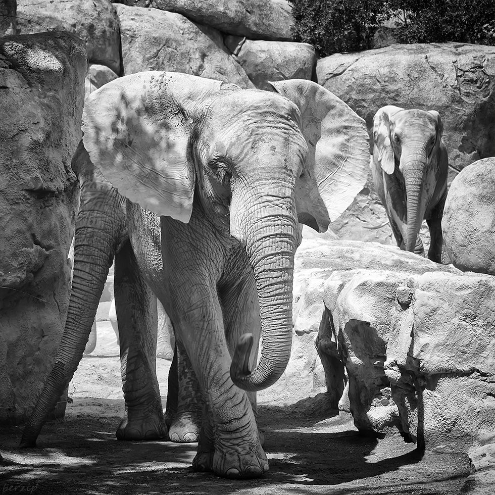 Zoos / Parcs animaliers - Page 28 46123878035_20d563e5d5_o