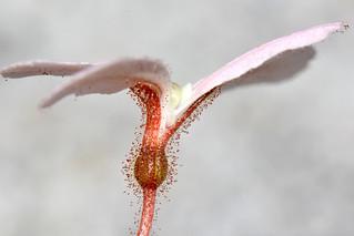 Moth tiggerplant