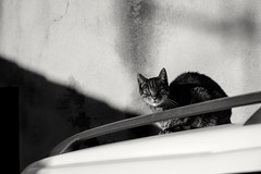 Cats Love Sun