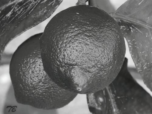 B&W Lemon Textures
