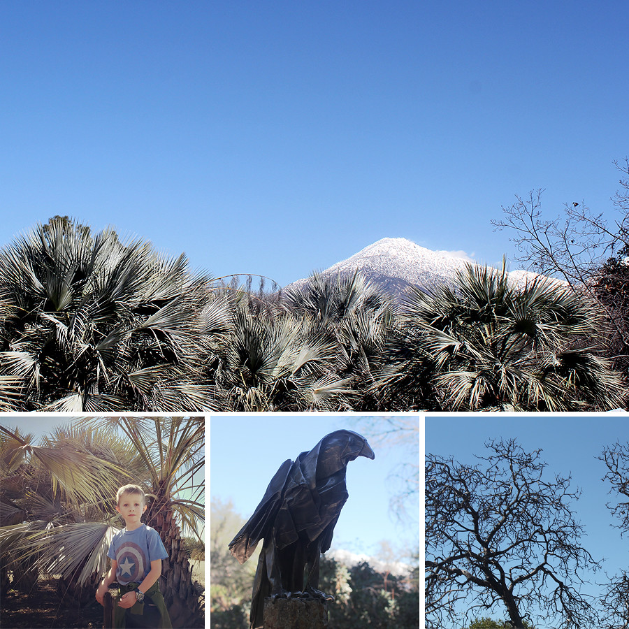 Rancho-Santa-Ana-Botanical-Gardens-Walk-2