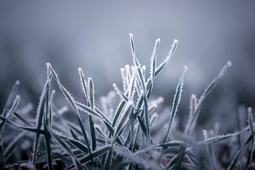 Paradise Frost