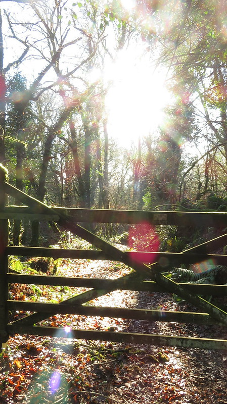 Light in the wood at Coombe Court
