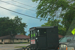 AMISH Wagon for Sale, Clearwater, Florida