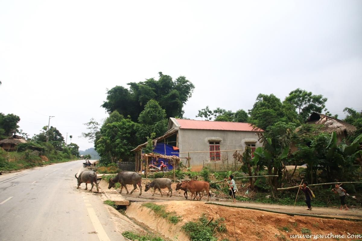 Vietnam_084