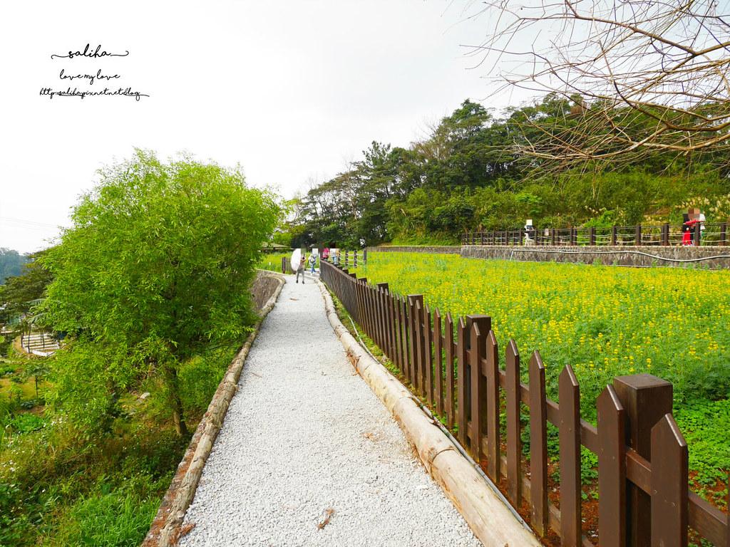 台北貓空景點推薦魯冰花海樟樹步道 (3)