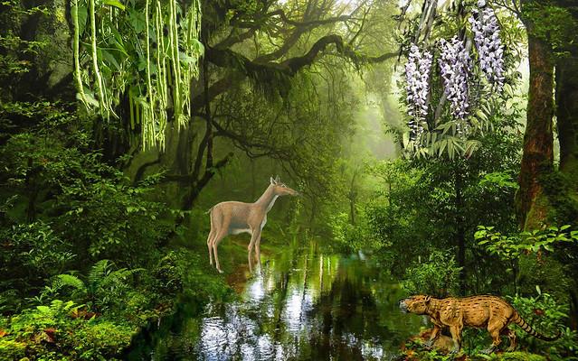 тропический лес 1