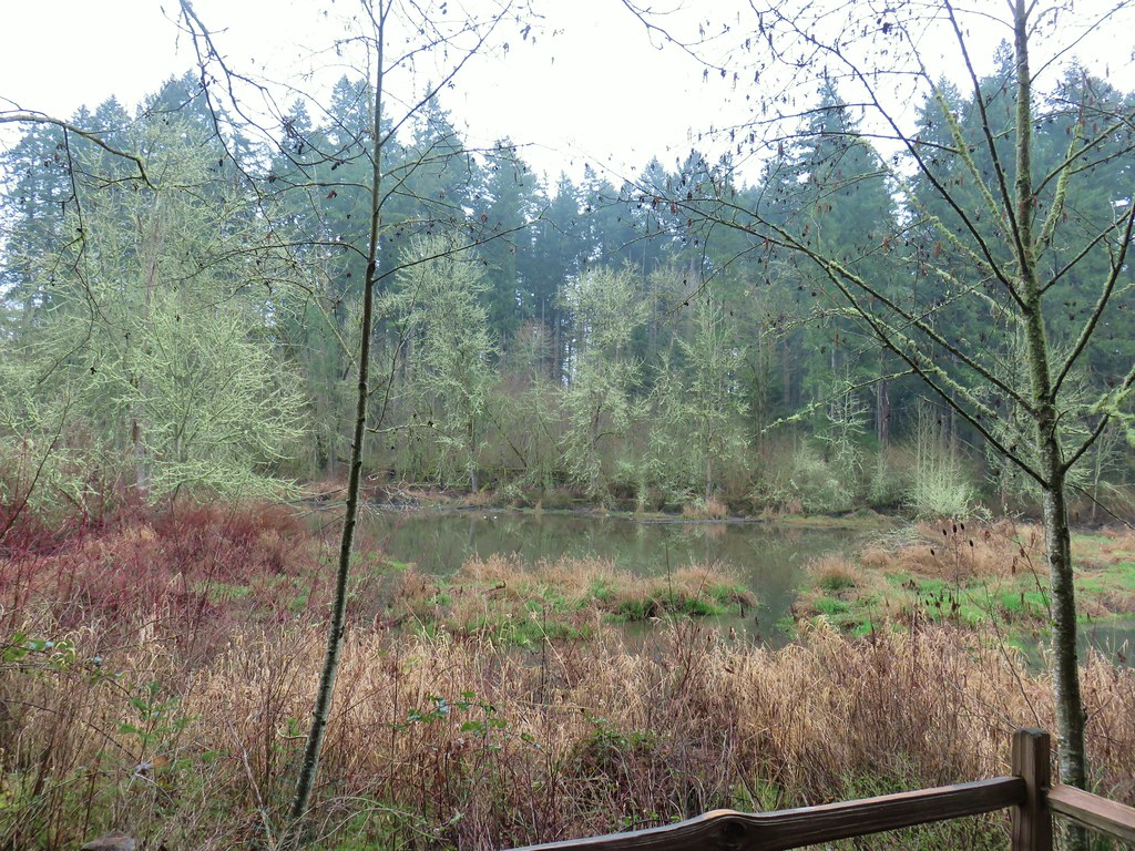 Wetlands along the Ash Loop