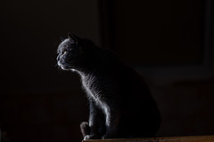 Cat in winter light