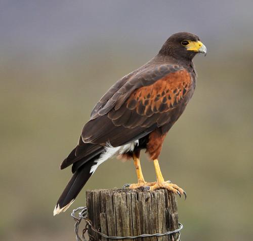 nature landscape birds