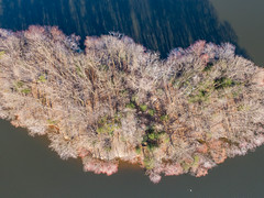Island in Burke Lake