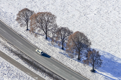 Trees In A Row - 14