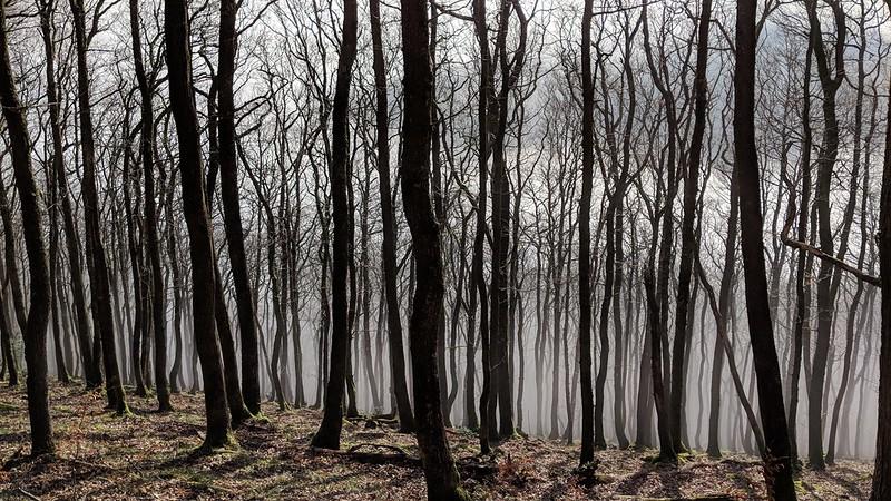 Drewston Wood inversion