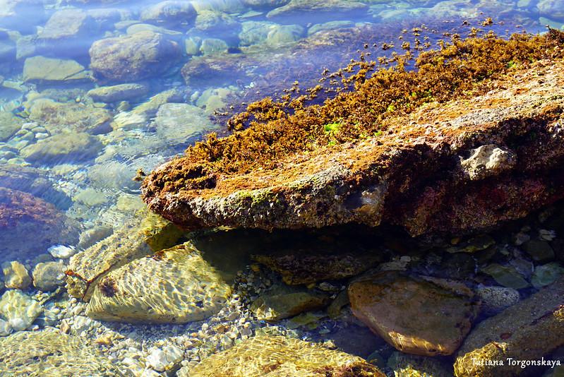 Камень, торчащий из воды